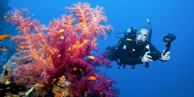 Обучение дайвингу: Цифровая подводная фотография.