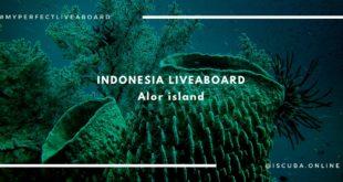 ALOR island. Liveaboard diving Indonesia.