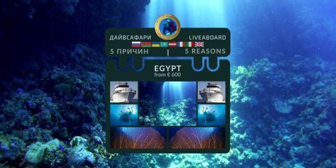 Дайвинг сафари: 5 причин нырять и жить на яхте во время путешествия