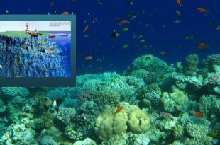 Daedalus reef - дайвсайт Красного моря