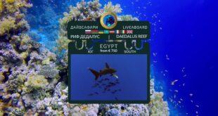 Egypt. Daedalus Reef