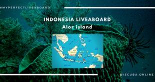 Liveaboard Indonesia. Alor island