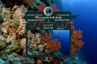 Egypt. Elphinstone Reef