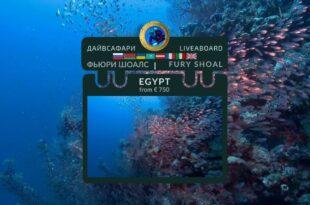 Egypt. Fury Shoal